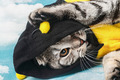 young cat in costume bee - PhotoDune Item for Sale