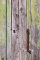 Old door - PhotoDune Item for Sale