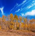 Autumn - PhotoDune Item for Sale