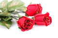 Red roses - PhotoDune Item for Sale