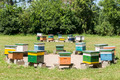 Apiary - PhotoDune Item for Sale