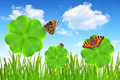 clover leaf and butterflies - PhotoDune Item for Sale