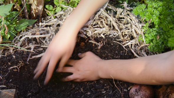 Digging In Veggie Patch
