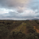 Olive Grove - VideoHive Item for Sale