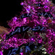 Christmas High Pink Led Light Tree  - VideoHive Item for Sale
