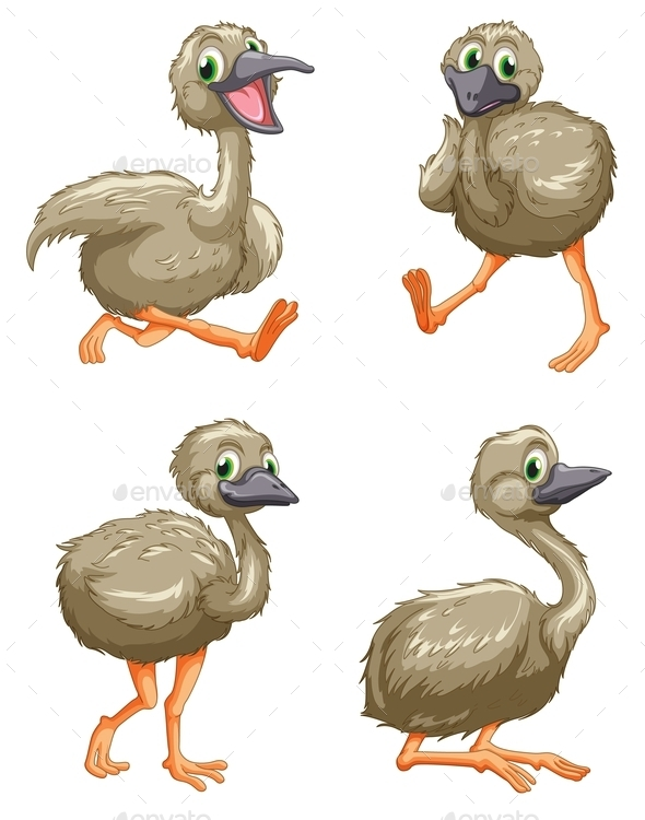GraphicRiver Emu Ostrich Series 9640279