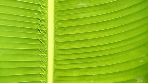 VideoHive Green Leaf In Nature 242 9642385