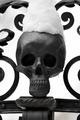 snowy skull - PhotoDune Item for Sale