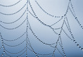 spider web - PhotoDune Item for Sale