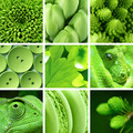 Green backgrounds and textures collage - PhotoDune Item for Sale
