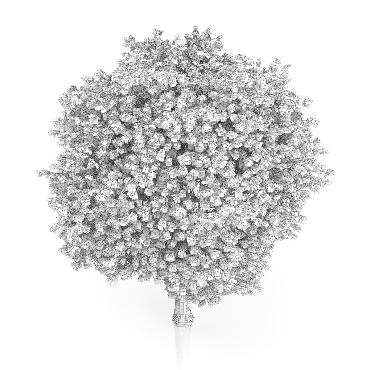 Roofing Concepts Ri London Plane Tree (Platanus × acerifolia) 13.4m by CGAxis ...