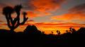Joshua Tree Sunset Cloud Landscape California National Park - PhotoDune Item for Sale