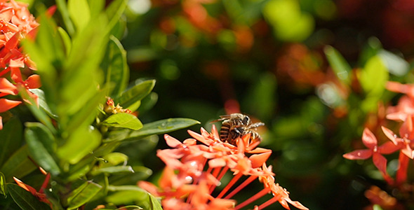 Bee Story 04