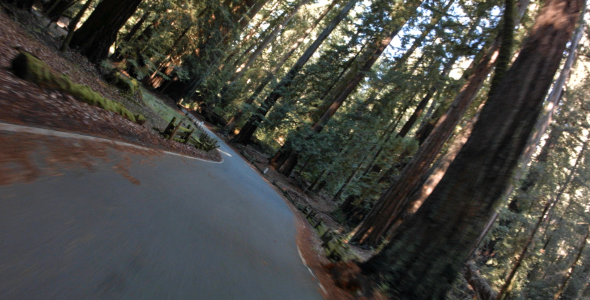 VideoHive Driving Through Forrest 9661196