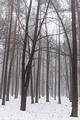 Forest with mist in winter - PhotoDune Item for Sale