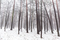 Foggy winter forest - PhotoDune Item for Sale