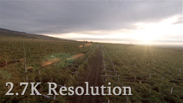VideoHive Flying over Vineyard 9667589