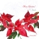 Background with Red Christmas Poinsettia 04 - GraphicRiver Item for Sale
