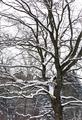 Winter tree - PhotoDune Item for Sale