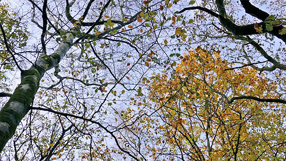 VideoHive Moving Under Trees Looking Up 9673752