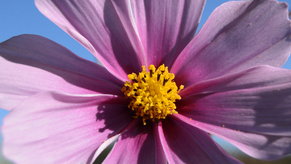 VideoHive Autumn Flower 9673785