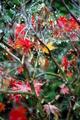 maple - PhotoDune Item for Sale