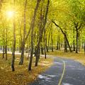 beautiful autumn park and sun - PhotoDune Item for Sale