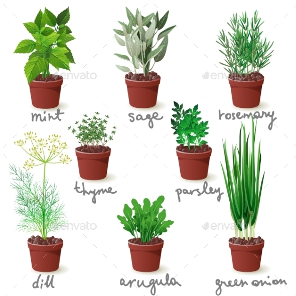 GraphicRiver Herbs in Pots 9675064