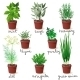 Herbs in Pots - GraphicRiver Item for Sale