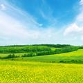 Rape field and blue sky - PhotoDune Item for Sale