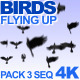 Birds Flying Up - VideoHive Item for Sale