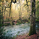 Tranquil River In Woods - VideoHive Item for Sale