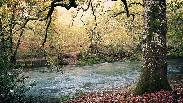 VideoHive Tranquil River In Woods 9680909
