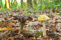 Edible and poisonous mushroom - PhotoDune Item for Sale
