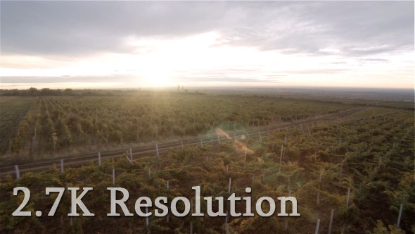 VideoHive Flying Over Vineyard 2 9681940