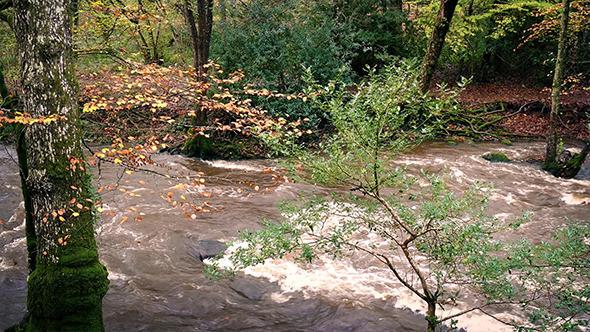 VideoHive Full River Breaking Banks In Woodland 9682691