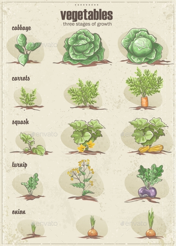 GraphicRiver Set of Vegetables with Three Stages of their Growt 9682813