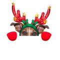 reindeer dog - PhotoDune Item for Sale