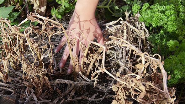 VideoHive Gardening 9687467