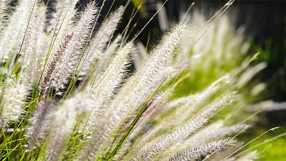Native Grass Plants Flowers