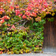 wooden door and walls are covered with ivy. - PhotoDune Item for Sale