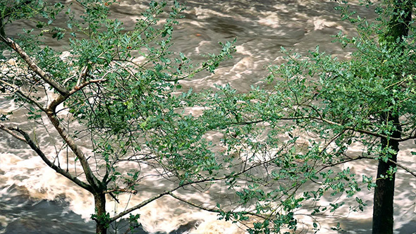 VideoHive Flooding River Through Trees 9692128