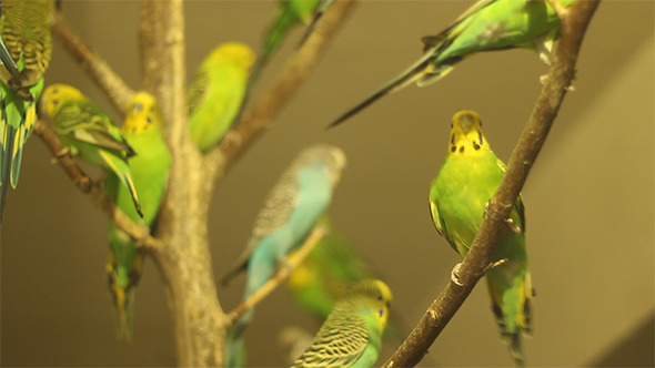 VideoHive Lots of Parrots 9692547