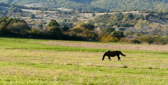 VideoHive Horse 4 9693259