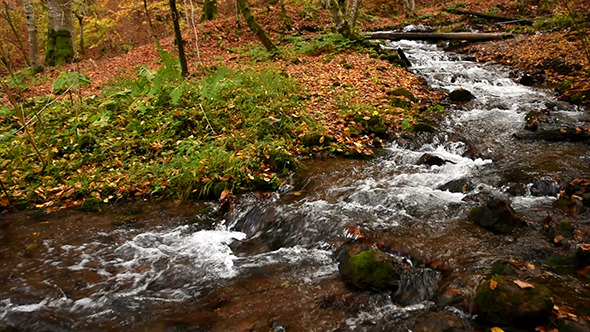 VideoHive Stream at the Forest With Fall Leaves 2 9693335