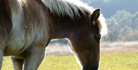 VideoHive Horse 5 9693354