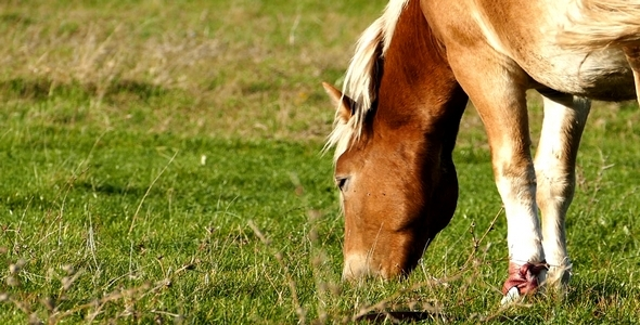VideoHive Horse 8 9693593