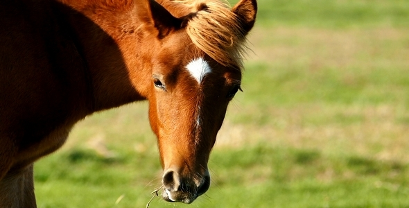 VideoHive Horse 9 9693650