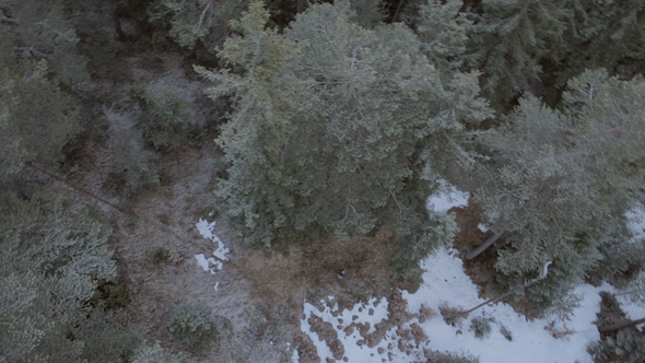 VideoHive Snowy Forrest Aerial Drone 9694042