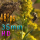 Bees Flying On Goldenrod Flowers - VideoHive Item for Sale